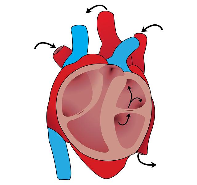Que savoir sur les maladies cardiovasculaires ?